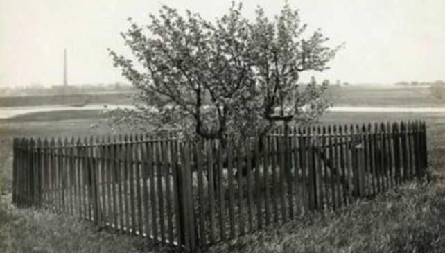 Touching It Will Get You In A World Of Trouble, So They Built A Fence Around This Tree Decades Ago.