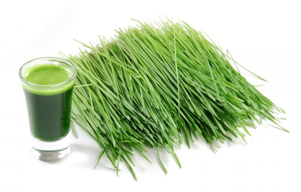 wheat-grass-2