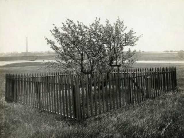 In 1630, Endicott planted a single pear sapling imported from across the Atlantic. It was a symbolic gesture, meant to make Europeans feel at home in their new world.