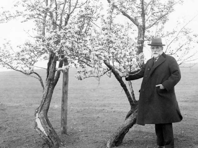 Descendants of John Endicott continued to maintain the pear tree, and soon it was a popular figure in American literature. Writers who referred to the Endicott Pear Tree included Henry Wadsworth Longfellow and the poet Lucy Larcom.