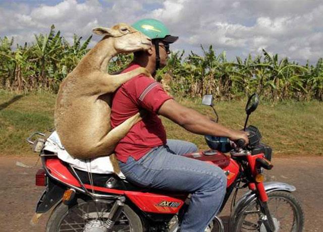 manwithanimalon-bike